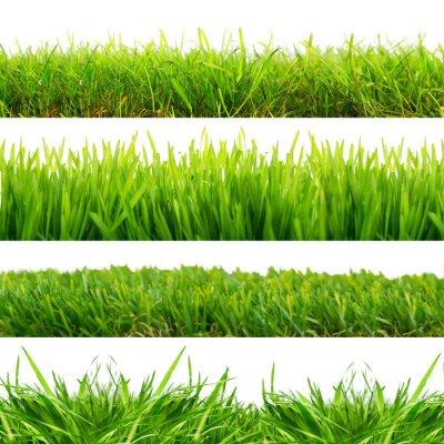 Adesivo 4 Wiesen Gras Freisteller