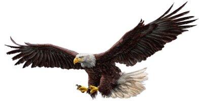 Adesivo A águia americana que voa o desenho ea pintura na ilustração branca do fundo do fundo.
