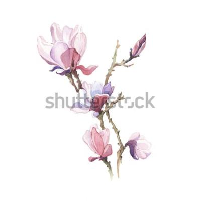 Adesivo A flor de aquarela de magnólia de primavera isolada no fundo branco