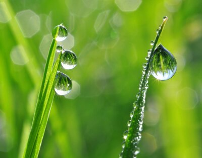 Adesivo A grama fresca com gotas de orvalho fecha-se