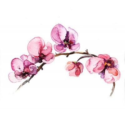 Adesivo a orquídea flores da aguarela isolado no fundo branco