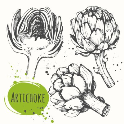 Adesivo Aartichoke. Conjunto de alcachofra desenhada mão. Alimentos orgânicos frescos.