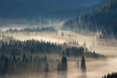 Adesivo Abeto, árvores, prado, baixo, vontade, coniferous, floresta, nebuloso, montanhas