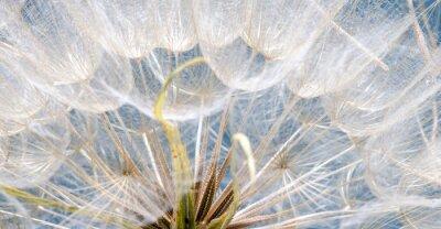Adesivo Abflug / Flugschirme der Pustblume beim Iniciar :)