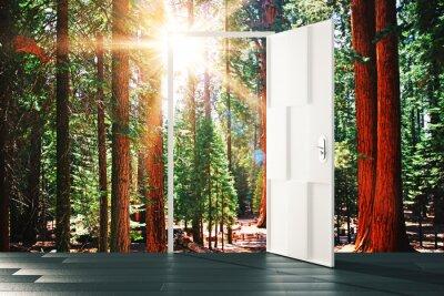 Adesivo Abra a porta ao conceito da floresta ensolarada