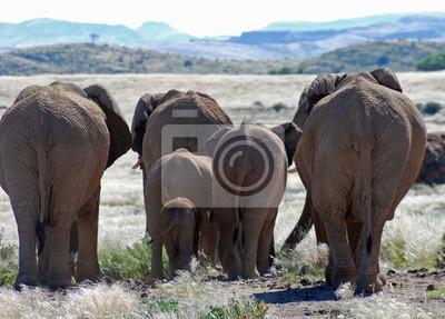 Adesivo Africano, elefantes, andar, através, damaraland