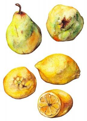 Adesivo Água, limão, citrino, pêra, fruta, jogo, isolado