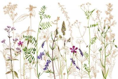 Adesivo Aguarela desenhando flores e plantas