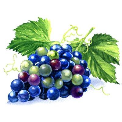 Adesivo Aguarela, grupo, azul, uvas