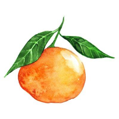 Adesivo Aguarela, maduro, laranja, mandarino, citrino, isolado