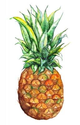 Adesivo Aguarela, mão, desenhado, abacaxi, exoticas, tropicais, fruta, isolado