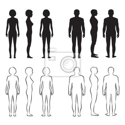 Anatomia Do Corpo Humano Homem Vector Frente Silhueta Da Mulher