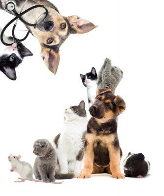 Adesivo Animais de estimação que procuram