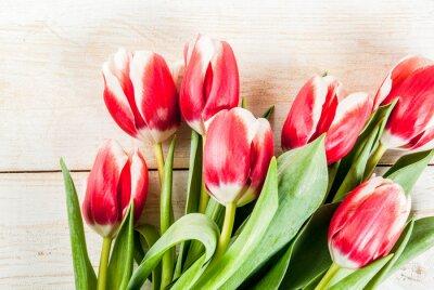 Adesivo Antecedentes para parabéns, cartões. Flores frescas da tulipa da mola, no fundo branco da madeira cópia superior cópia espaço da cópia