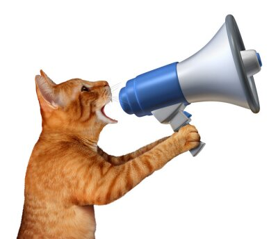 Adesivo Anúncio Cat