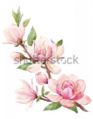 Adesivo Aquarela ilustração de um ramo com flores rosa Magnólia flor cartão de primavera