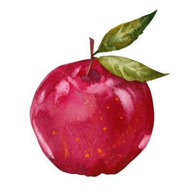 Adesivo aquarela maçã vermelha
