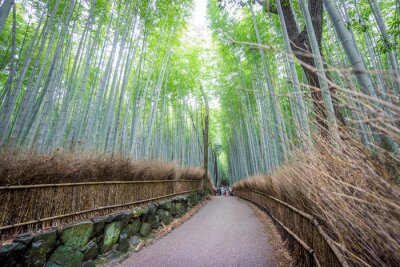 Adesivo Arashiyama, bambu, bosque, Kyoto, Japão
