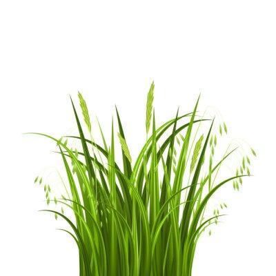Adesivo Arbusto grama isolado no fundo branco