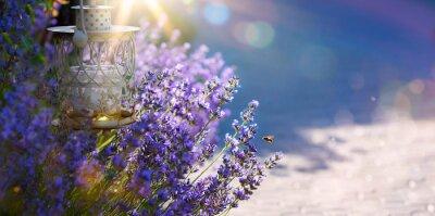 Adesivo arte verão ou primavera belo jardim com flores de lavanda