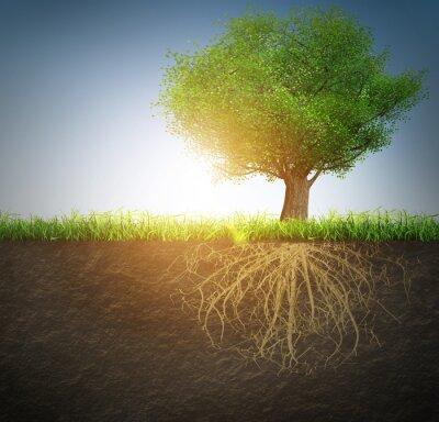 Adesivo árvore com raízes
