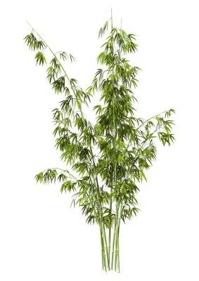 Adesivo Árvore de bambu
