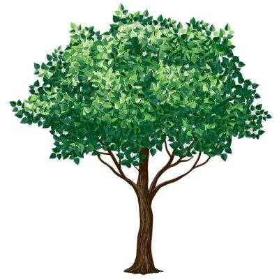 Adesivo Árvore de folhagem