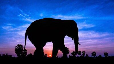 Adesivo Árvore do elefante andpPalm em tempo crepuscular