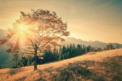 Adesivo Árvore do outono e raio de sol dia quente paisagem tonificado no vintage