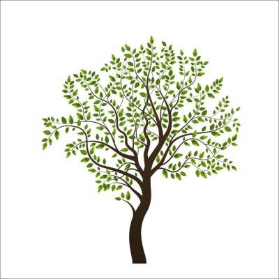 Adesivo Árvore isolada no fundo branco