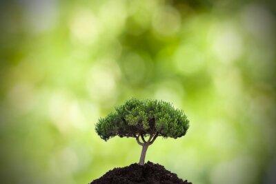 Adesivo árvore no primeiro plano