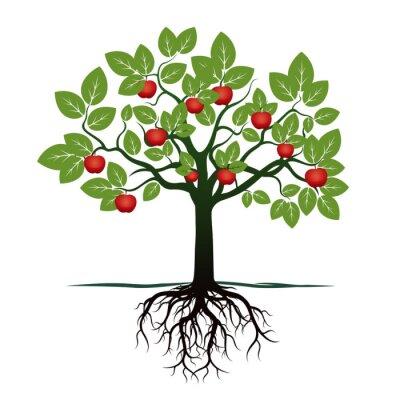 Adesivo Árvore nova com folhas verdes, raizes e maçãs vermelhas. Ilustração vetorial