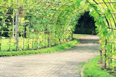 Adesivo Árvore, túnel, angulado, luffa, planta