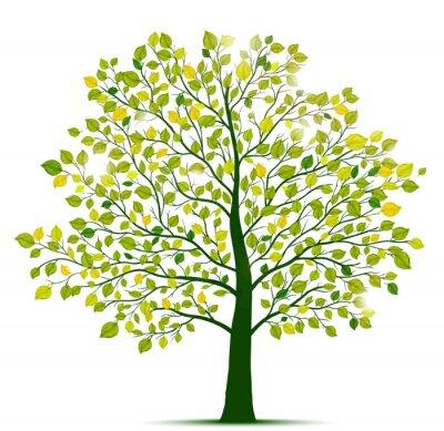 Adesivo Árvore verde isolado
