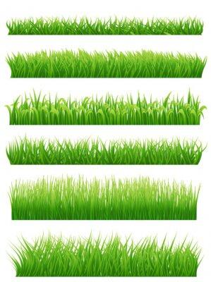 Adesivo As beiras da grama verde ajustaram-se no branco. Vector a ilustração