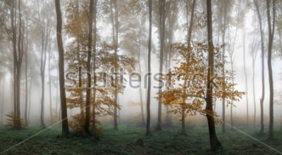 Adesivo Autumn foggy forest. Balkan Mountains, Bulgaria.