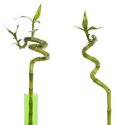 Adesivo Bambou porte bonheur