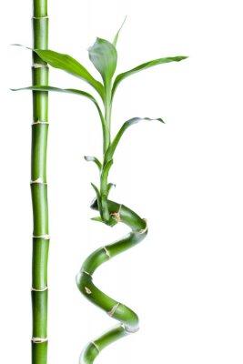 Adesivo Bambou zen