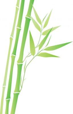 Adesivo Bambu
