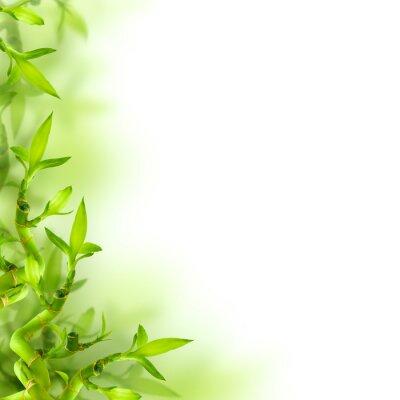 Adesivo Bambu e folhas verdes, fundo
