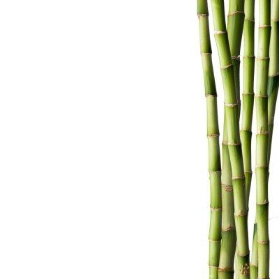 Adesivo Bambu fresco com floresta de bambu no fundo