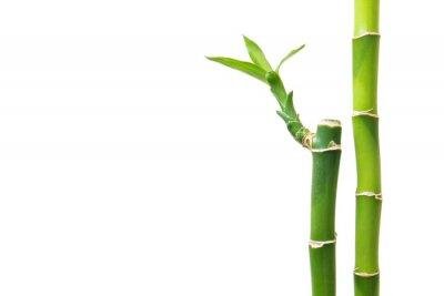 Adesivo Bambu fresco isolado no fundo branco