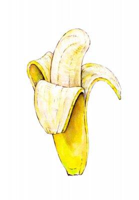 Adesivo Banana isolada no fundo branco. Watercolor ilustração colorida. Frutas tropicais. Trabalho manual