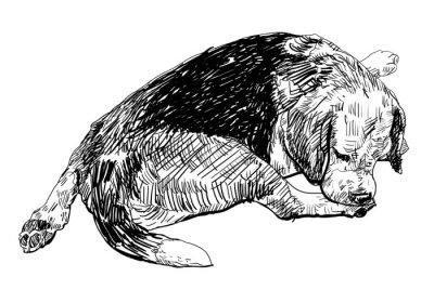 Adesivo Beagle está mordendo suavemente sobre a sua perna.