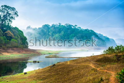 Adesivo beautiful landscape with wild forest and river with fog in India. Periyar National Park, Kerala, India