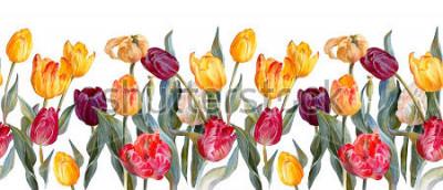Adesivo Beira horizontal floral. Tulipas coloridas no fundo branco Ilustração botânica. Pintura aquarela.