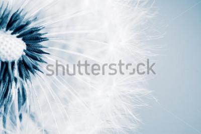 Adesivo Belo dente de leão com sementes, close-up