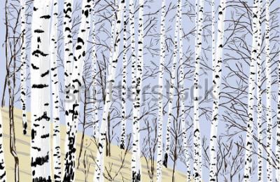 Adesivo birch grove in the spring