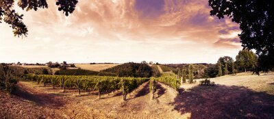 Adesivo Bonito, pôr do sol, vinhedos, tuscany