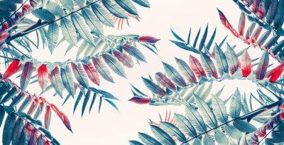 Adesivo Bonito, tropicais, folhas, fundo, bandeira